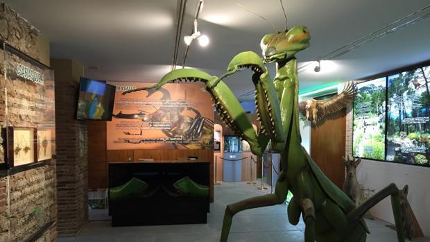 Sala de exposiciones en la que se muestran diferentes insectos del globo
