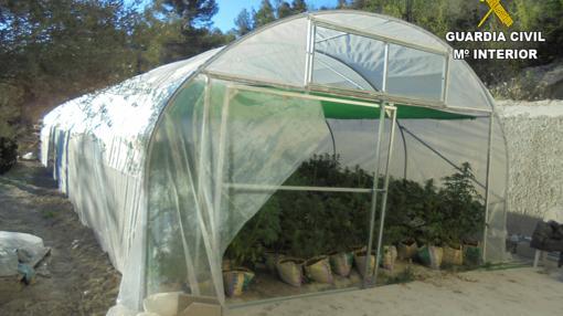 Invernadero de droga de la organización en la casa de Penáguila, Alicante
