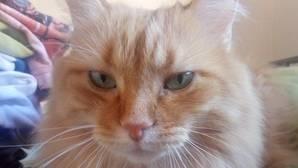 Foto de un gato subida a la red de microblogs