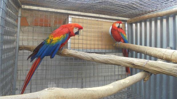 Dos de los aves recuperadas en la operación