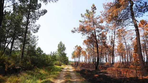 Terreno calcinado a un flanco de un pista del lugar de Berredo, Agolada