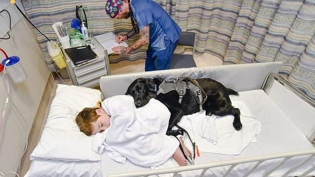 Los niños hospitalizados en el Rey Juan Carlos de Móstoles podrán recibir la visita de sus perros