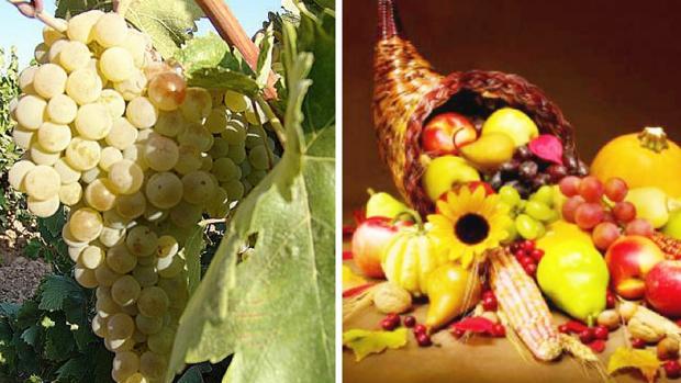 En EEUU y en España se celebra la recolección. Aquí la Uva, allí el maíz o la calabaza