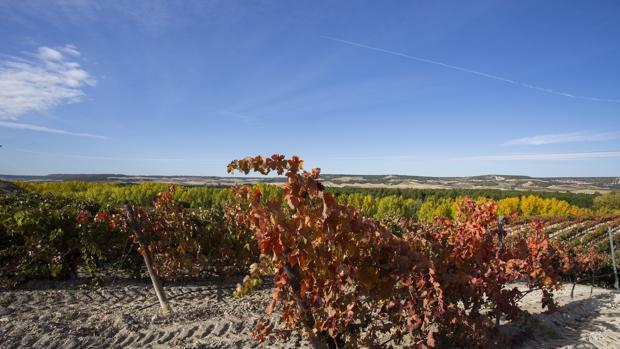 La bodega Pago de Carrovejas se encuentra situado en plena Ribera del Duero, a cinco kilómetros de Peñafiel