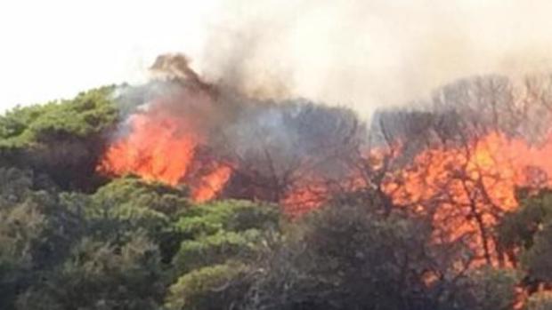 Uno de los ocho incendios provocados en la pinada de Guardamar del Segura en el último mes