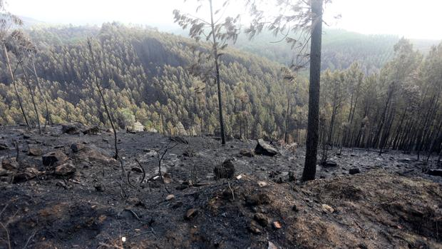 Zona de As Neves, en Pontevedra, tras los incendios de octubre