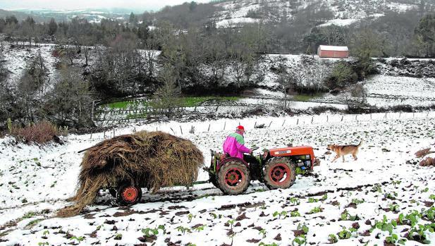 Un hombre trabaja con un tractor en Castro de Cuiñas (Lugo)
