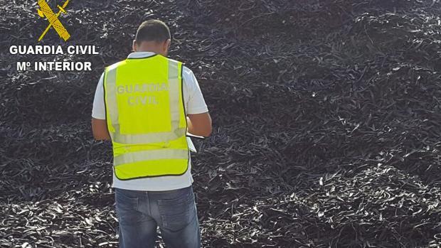 Imagen de los más de 47.000 kilos de algarroba sustraídos