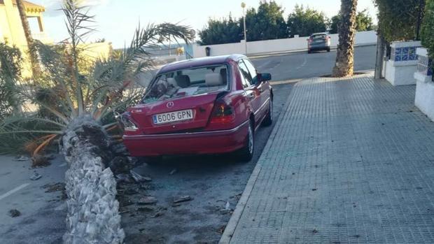 Un coche sobre el que ha caído una palmera por el viento, en la Vega Baja alicantina
