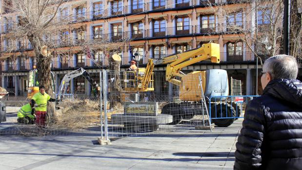 Operarios realizan los primeros trabajos de tala en la plaza esta mañana