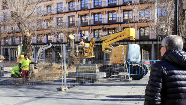 Operarios talan uno de los árboles instalados en la céntrica plaza de Zocodover