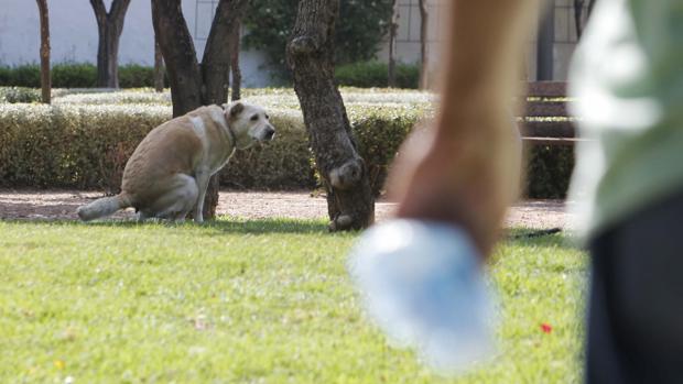 Imagen de archivo de un perro en un parque público y su dueño con la bolsa recoge-heces