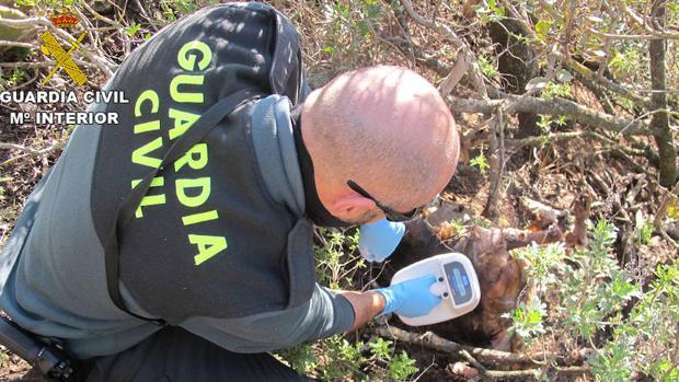 El Seprona en el lugar donde fueron encontrados los cadáveres de los perros