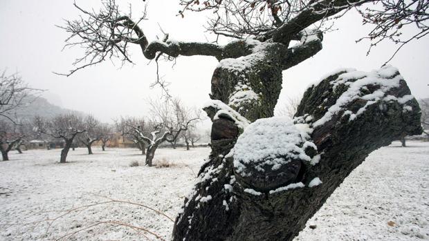 Imagen de la nieve tomada este domingo en la localidad de Ares