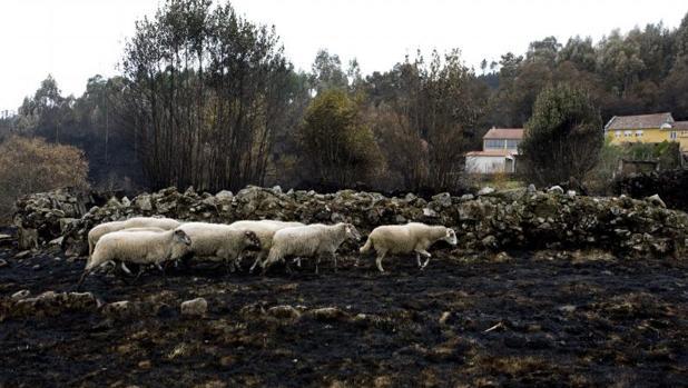 Imagen de un terreno calcinado en Melón
