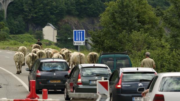 Coches y vacas en la precaria carretera francesa que conecta con el gran Túnel de Somport