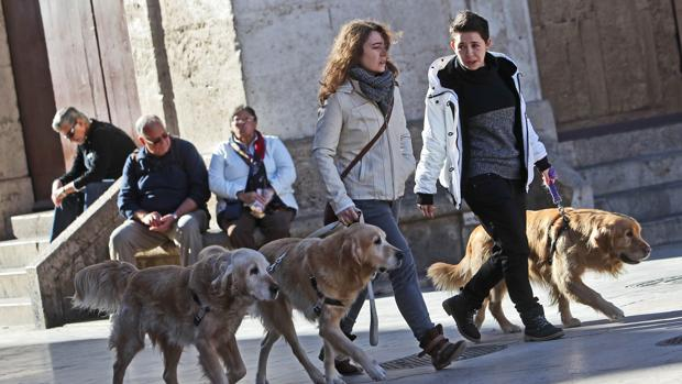 Dos jóvenes pasean a sus mascotas en el centro de Valencia