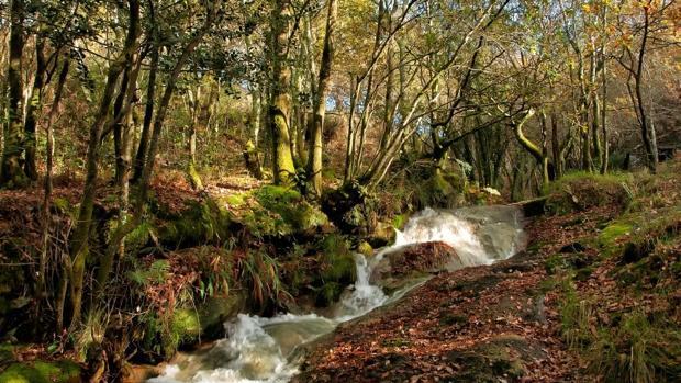Imagen de uno de los regatos, en el área del Portiño, del monte de Froxán (Lousame)