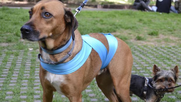 Imagen de un perro con el dispositivo Doggies