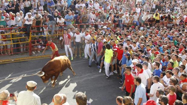 Celebración del toro enmaromado en Benavente (Zamora)
