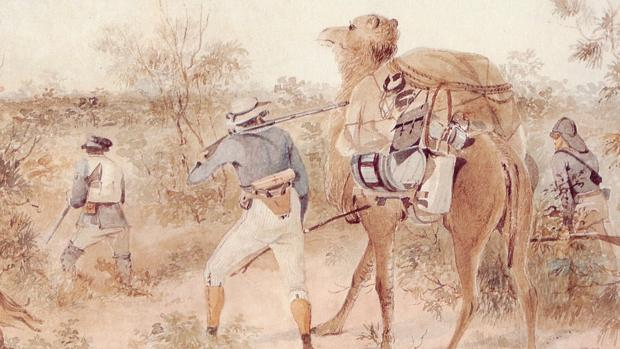 El explorador John Ainsworth Horrocks con su camello canario Harry