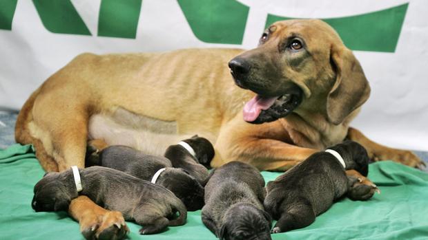Cinco cachorros recién nacidos
