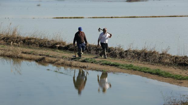La crecida del Ebro ha vuelto a inundar campos en varios municipios zaragozanos
