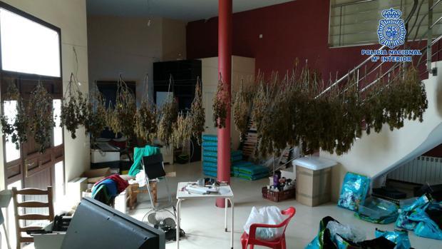 Laboratorio clandestino de cultivo «indoor»