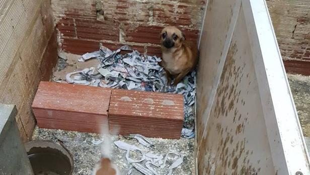 Imagen de uno de los perros rescatados