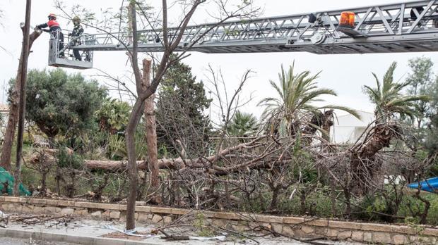 Efectivos de Bomberos en tareas de tala de árboles en San Juan de Alicante
