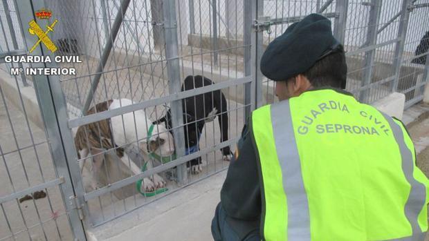 Un agente observa los perros que causaron el ataque