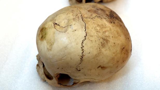 Los restos óseos están siendo analizados en el Imelga