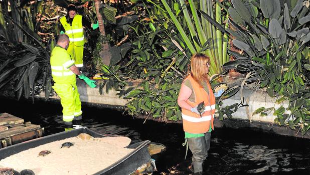 Los operarios retiran, la madrugada de ayer, las tortugas del estanque de la estación de Atocha