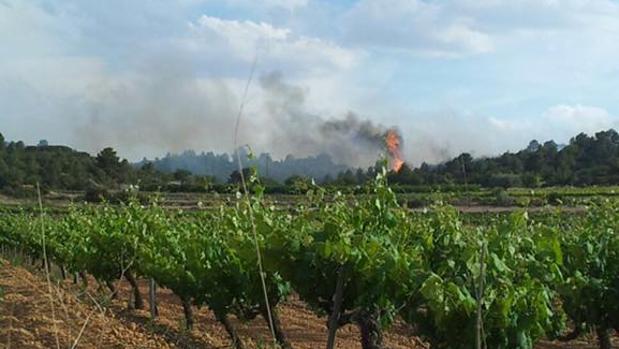 Imágenes del incendio forestal de Cheste
