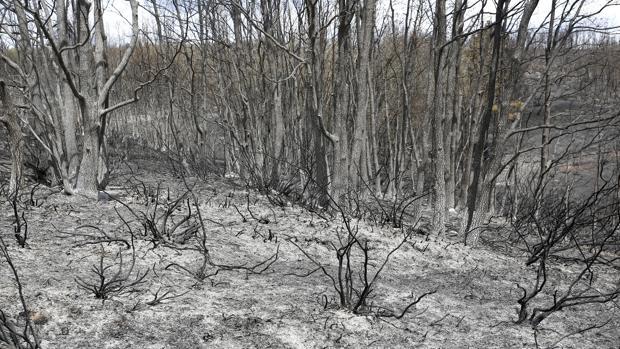 Zona arrasada por el fuego