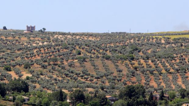 Terrenos donde se levantará el parque; al fondo, el castillo de Guadamur