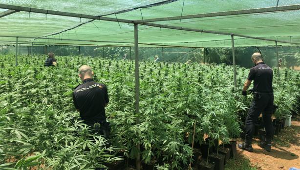 Imagen de los agentes en el invernadero