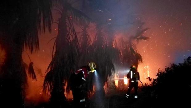 Tareas de extinción del fuego en el palmeral de Elche, este martes