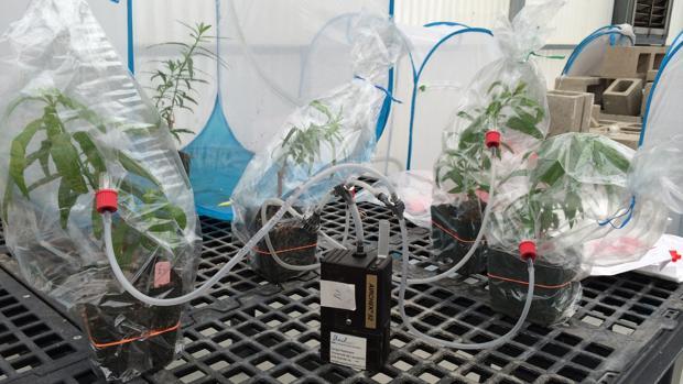 Imagen facilitada por el CSIC de ejemplares en estudio en el centro Misión Biológica de Galicia