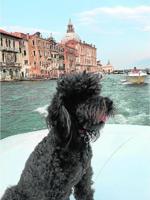 «Balty» en Venecia