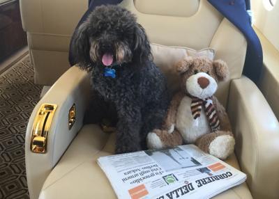 La perrita acompaña a su amo en todos sus viajes