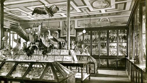 El gabinete de Historia Natural de Lecároz