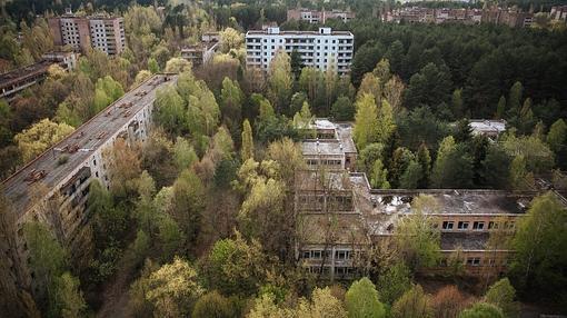 Los árboles crecen en la ciudad de Chernóbil