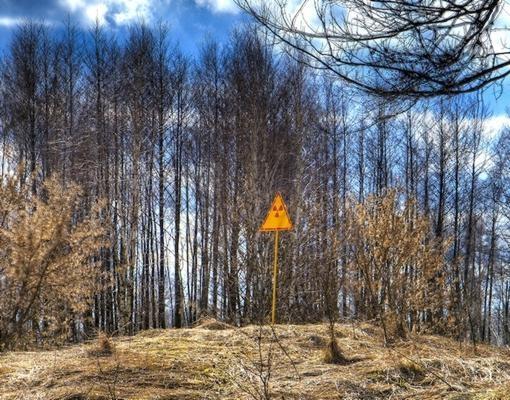 Imagen del bosque rojo, tomada en 2009. En el primer centímetro de suelo se concentran partículas del isótopo radiactivo 137 del Cesio