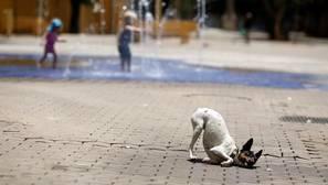 Un perro loco causa pánico en China y hiere a 23 personas