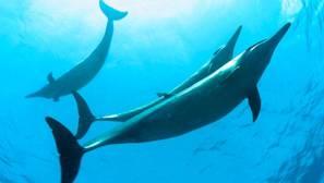 Obama crea en Hawái la mayor área marina protegida del mundo