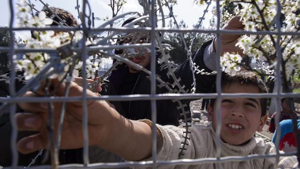 Un niño coloca flores en la valla mientras espera en la parte griega poder cruzar a Macedonia, cerca de la localidad macedonia de Gevgelija