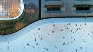 Aprende a deshacerte de los mosquitos de tu coche