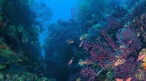 La acidificación del océano propicia que los bosques de algas sustituyan a los fondos de coral