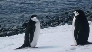 ¿Cuántos pingüinos alberga la Isla Decepción?